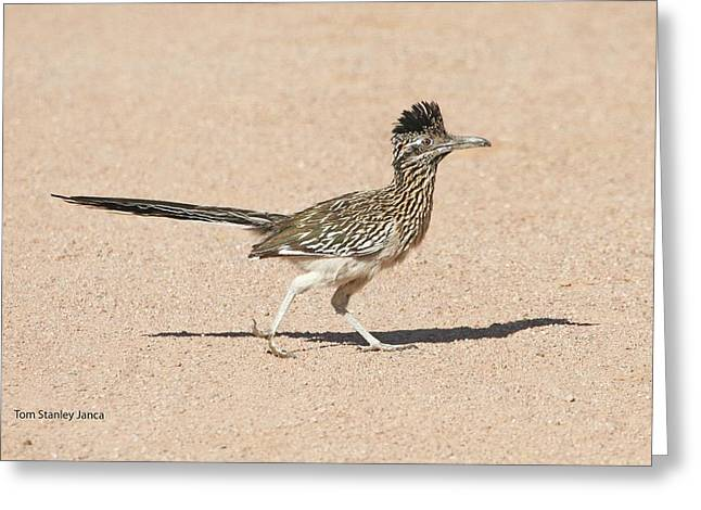 Greeting Card featuring the photograph Road Runner On The Road by Tom Janca