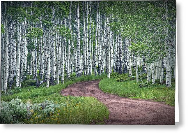 Road Through A Birch Tree Grove Greeting Card