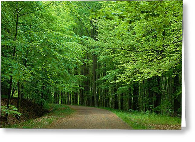 Road Through A Forest Near Kassel Greeting Card by Panoramic Images