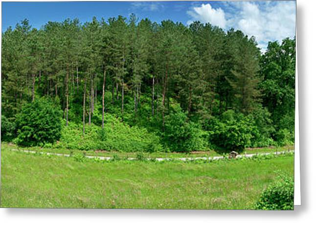Road Through Forest Greeting Card by Panoramic Images