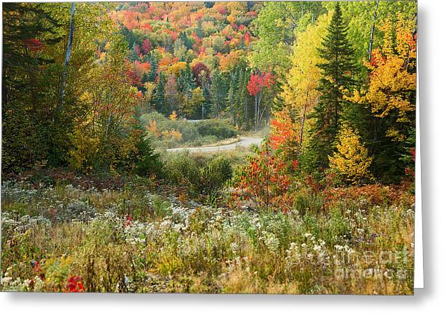 Road To Quill Hill Greeting Card by Brenda Giasson