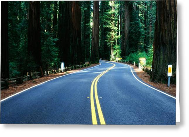 Road Winding Through Redwood Forest Greeting Card by Panoramic Images