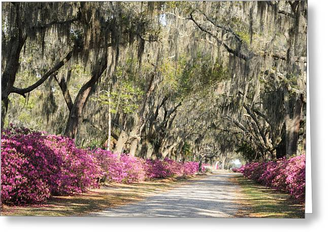 Greeting Card featuring the photograph Road With Azaleas And Live Oaks by Bradford Martin