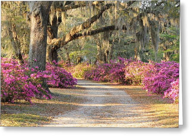 Road With Live Oaks And Azaleas Greeting Card
