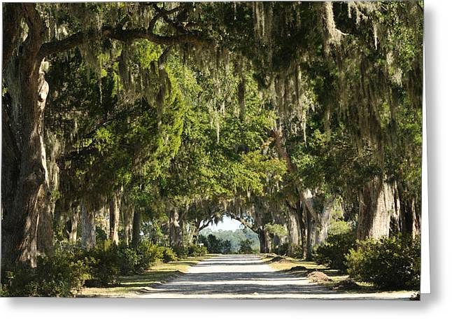 Greeting Card featuring the photograph Road With Live Oaks by Bradford Martin