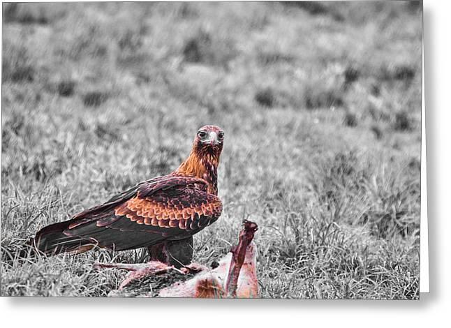 Roadkill For Lunch V2 Greeting Card by Douglas Barnard