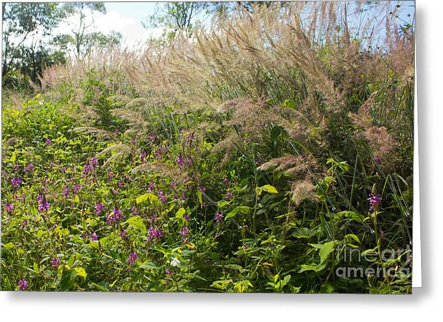 Greeting Card featuring the photograph Roadside Blooms by Jose Oquendo