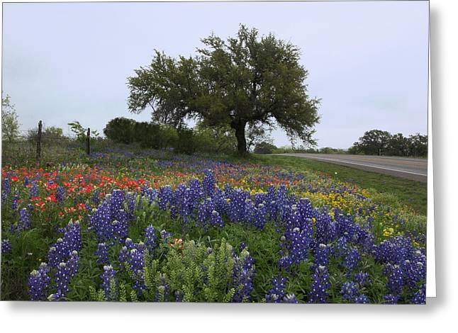 Greeting Card featuring the photograph Roadside Splendor by Susan Rovira
