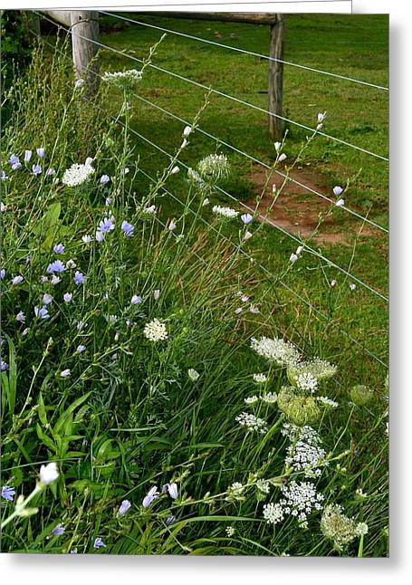 Roadside Wildflowers Greeting Card