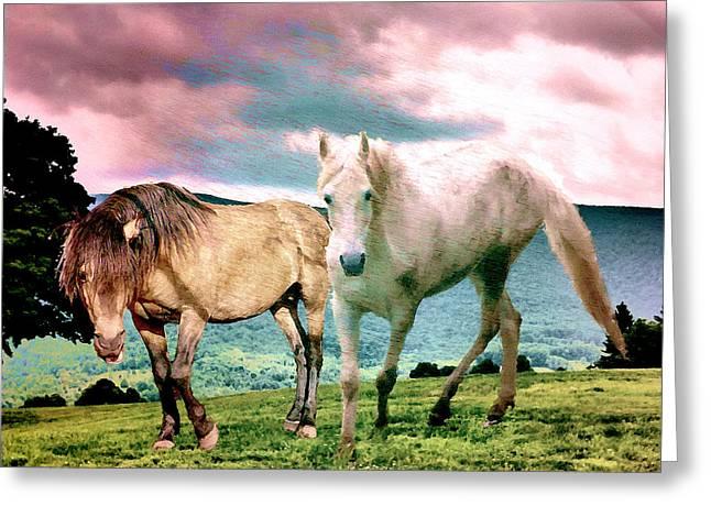Roaming Stallions Greeting Card by Patricia Keller
