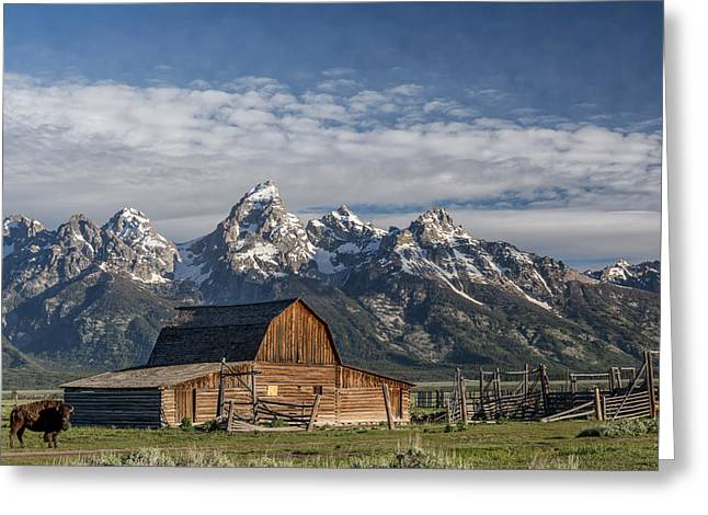 Roaming The Range Greeting Card by Jon Glaser