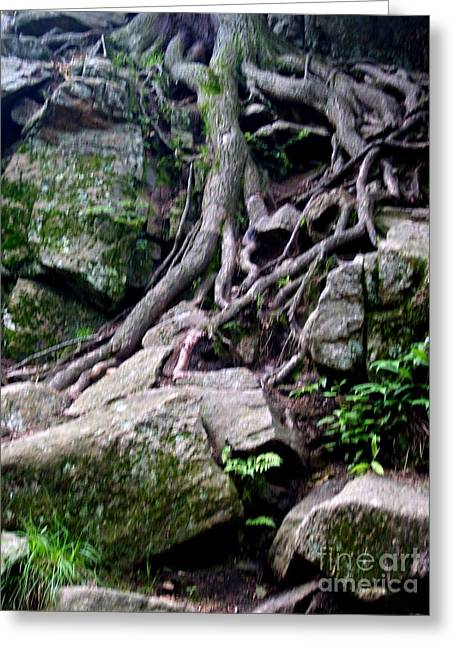 Roaming Tree Roots Greeting Card