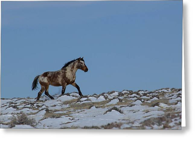 Roan In Snow Greeting Card