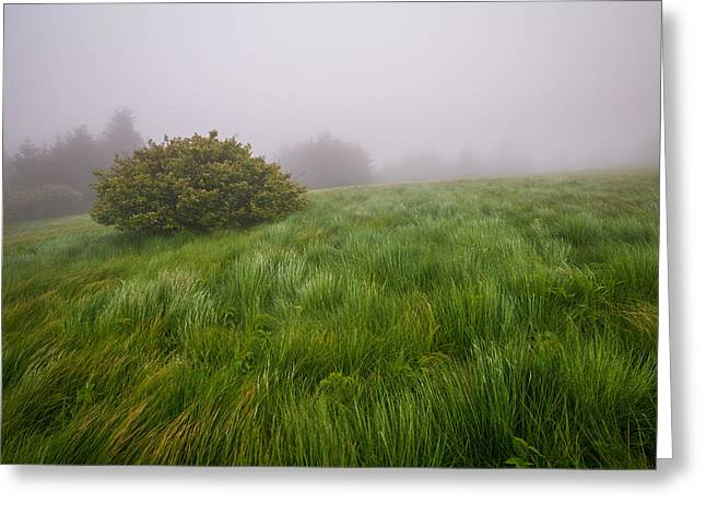 Roan Mountain Appalachian Trail Landscape Photography Windswept Greeting Card