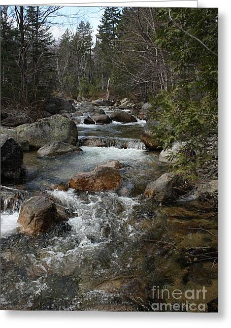 Roaring Brook Greeting Card by Joseph Marquis