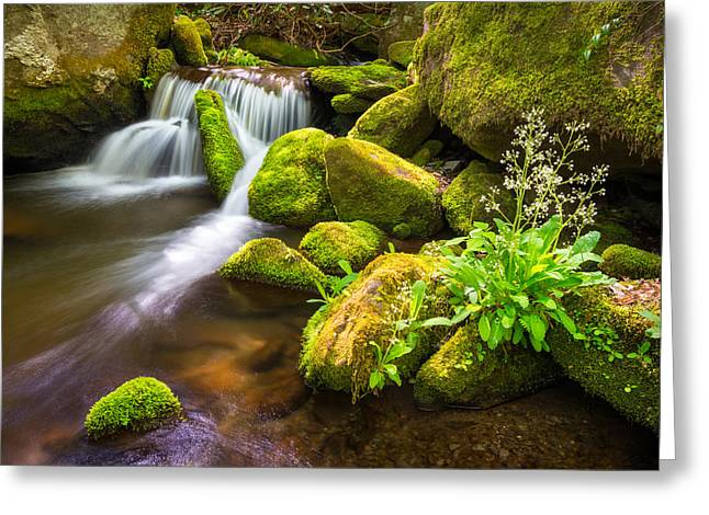Roaring Fork Great Smoky Mountains National Park Tn Greeting Card by Dave Allen