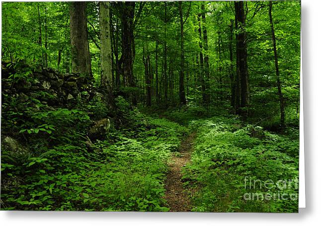 Greeting Card featuring the photograph Roaring Fork Trail by Debbie Green