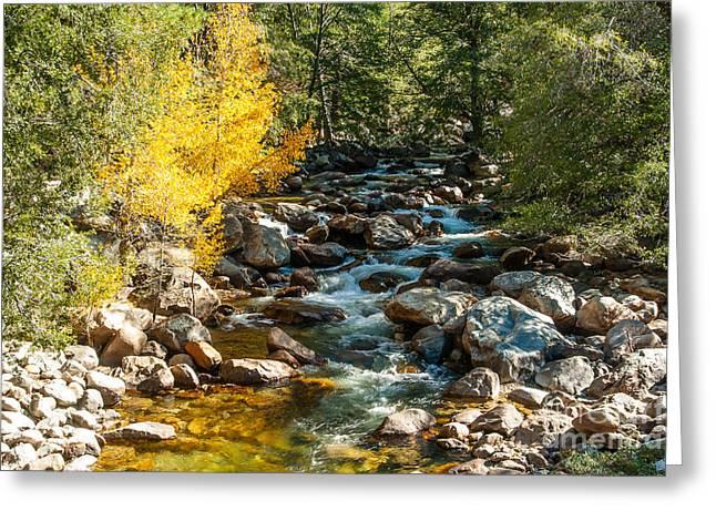 Roaring River 1-7782 Greeting Card
