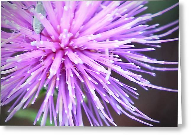 Robert Melvin - Fine Art Photography - Bug And Thistle Greeting Card