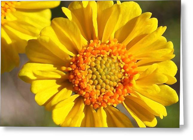 Robert Melvin - Fine Art Photography - Call Me Sunshine Greeting Card