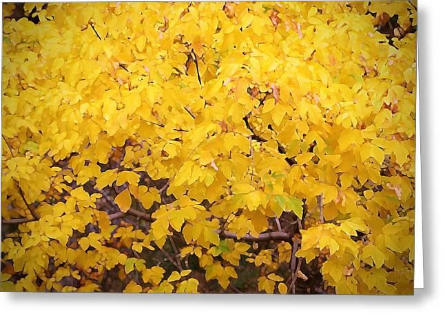 Robert Melvin - Fine Art Photography - Maple Yellow Greeting Card