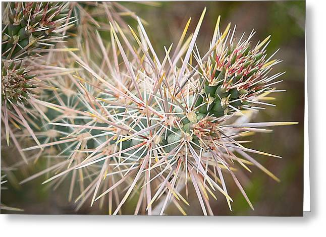 Robert Melvin - Fine Art Photography - Thorny Issue Greeting Card