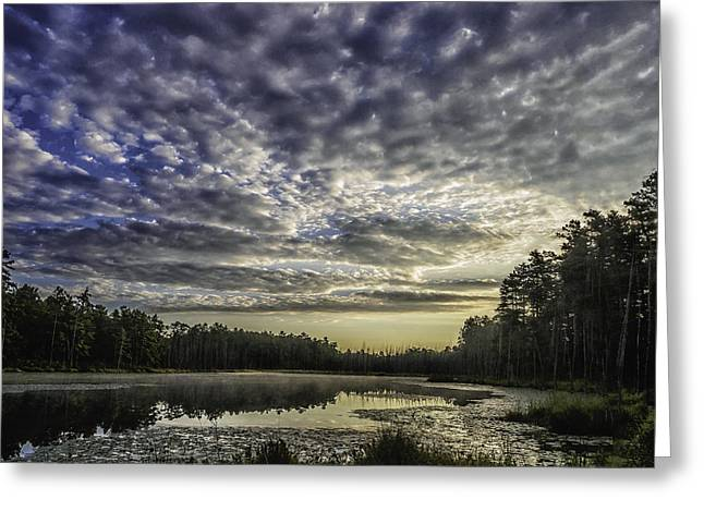 Roberts Branch Pine-lands Landscape Greeting Card by Louis Dallara
