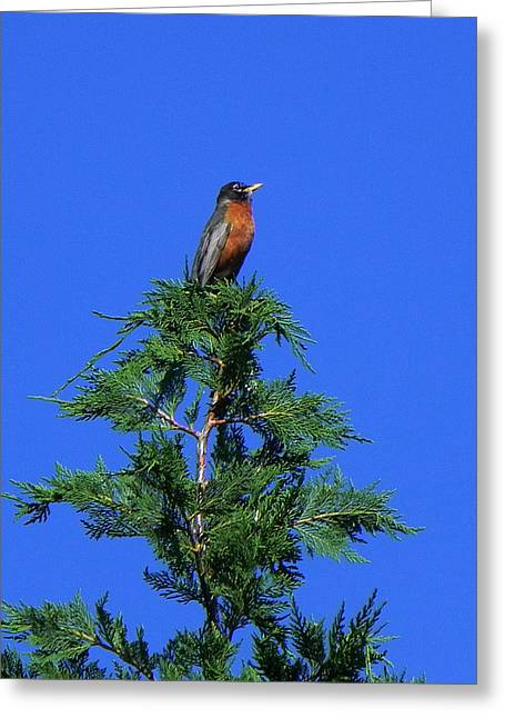 Robin Christmas Tree Topper Greeting Card