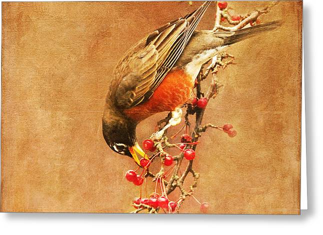 Robin Eating Berries Greeting Card