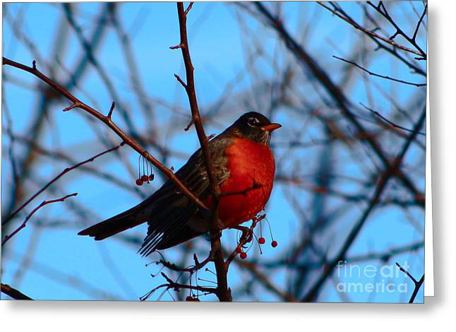 Greeting Card featuring the photograph Robin by Gena Weiser