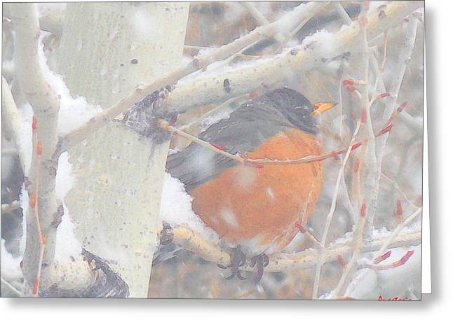 Robin In April Snow Greeting Card