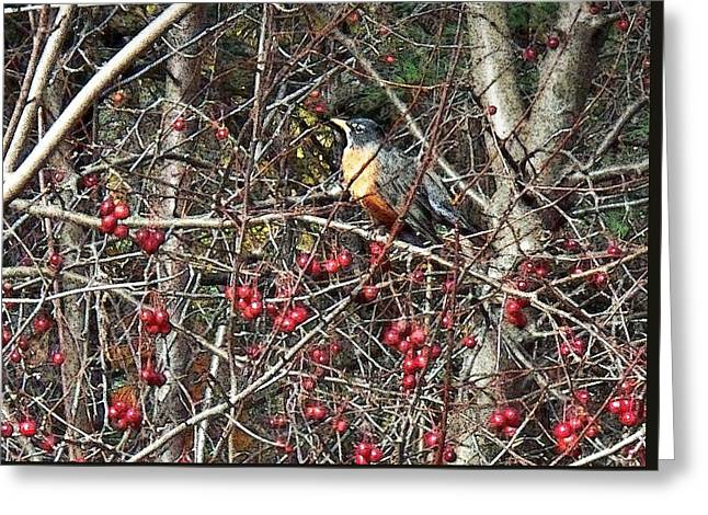 Robin In The Crab Apple Trees Greeting Card