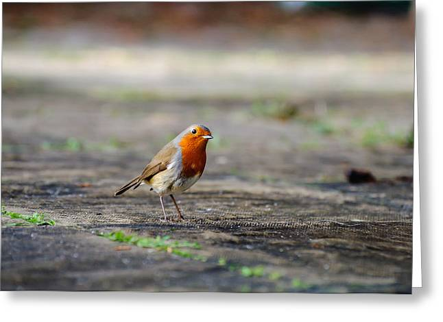 Robin Greeting Card by Ivelin Donchev