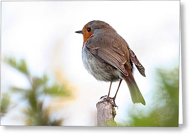 Robin On A Pole Greeting Card