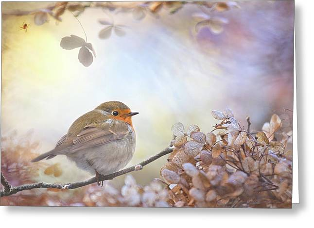 Robin On Dreams Greeting Card