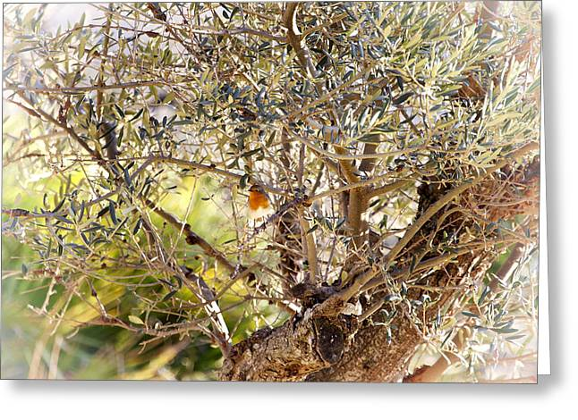 Robin Perched On Olive Tree Greeting Card
