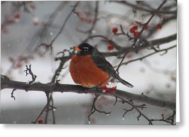 Robin Winter Greeting Card by Alicia Knust