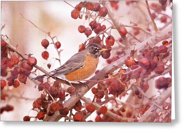 Robin With Red Berries Greeting Card by Daphne Sampson