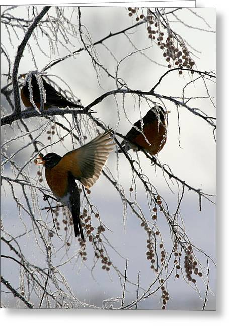 Robins Cold Breakfast Greeting Card by Rebecca Adams