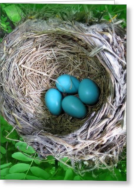 Greeting Card featuring the photograph Robin's Eggs by Ramona Johnston