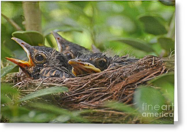 Robins In The Nest Greeting Card