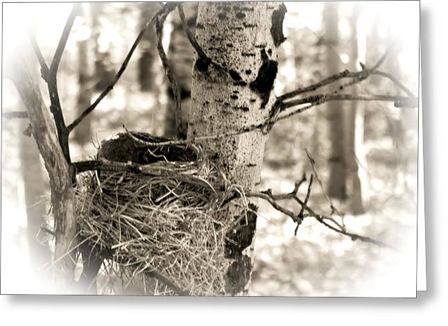 Greeting Card featuring the photograph Robins Nest In The Aspens by William Havle