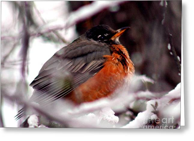 Greeting Card featuring the photograph Robins' Patience by Lesa Fine