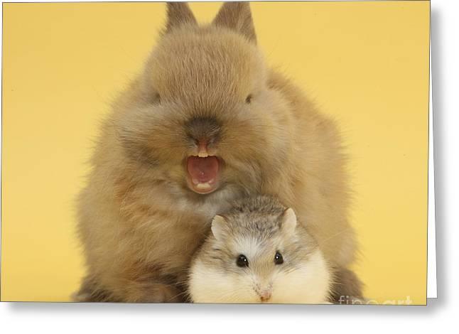 Roborovski Hamster And Rabbit Greeting Card by Mark Taylor