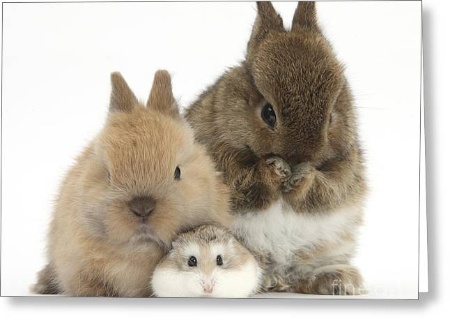 Roborovski Hamster And Rabbits Greeting Card by Mark Taylor