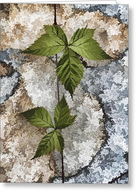 Rock And Vine Greeting Card