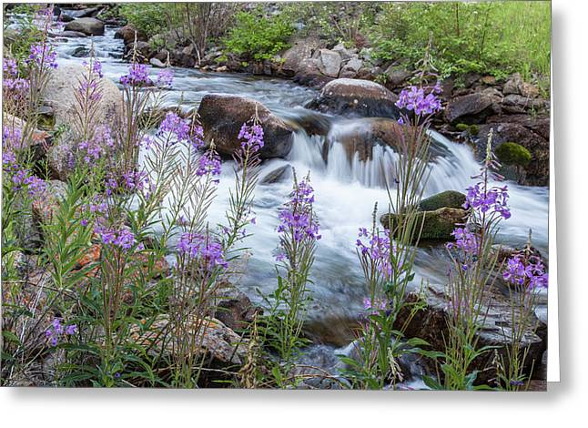 Rock Creek In The Pioneer Mountains Greeting Card by Chuck Haney