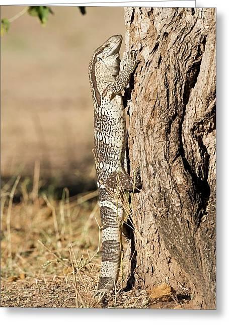 Rock Monitor Lizard Climbing A Tree Greeting Card by Tony Camacho