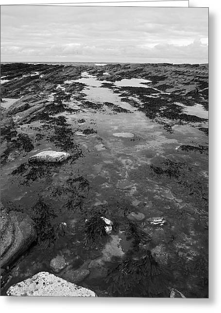 Rock Pool Greeting Card by Steve Watson