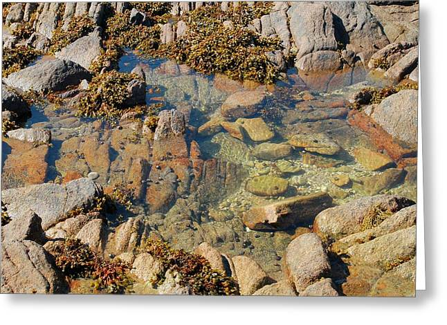 Rock Pool Greeting Card